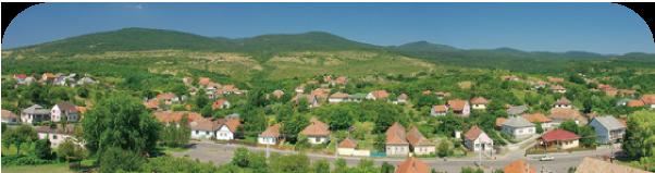 ハンガリーアカシヤ